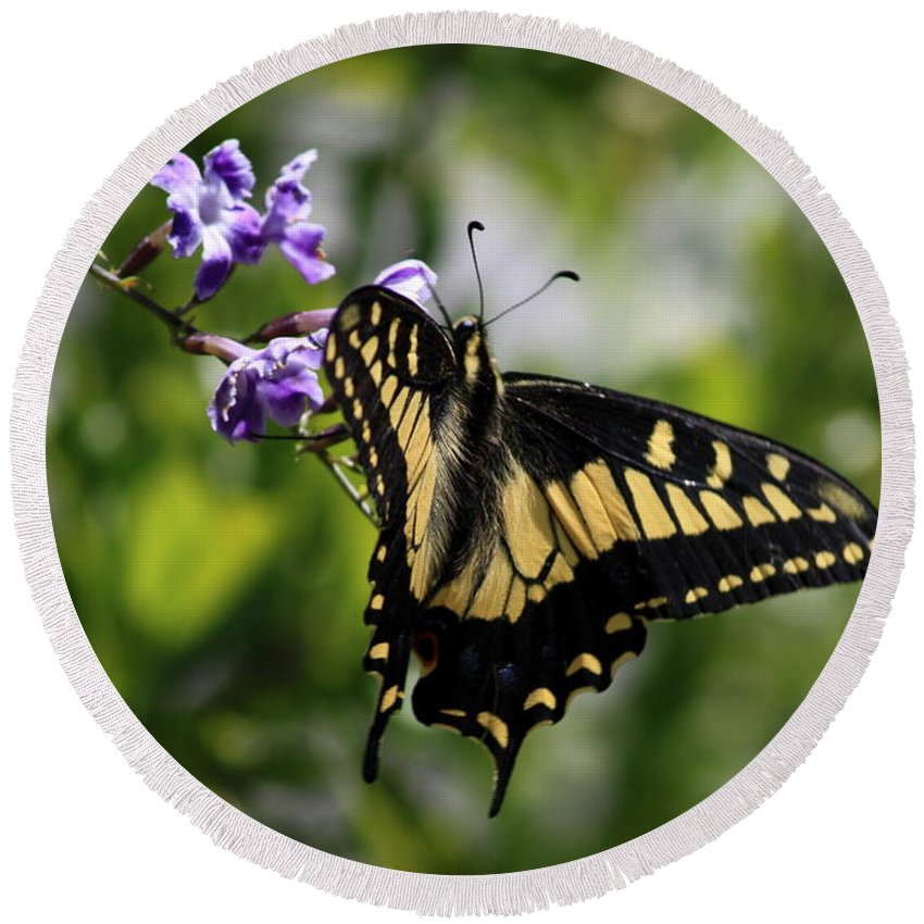 Swallowtail Butterfly Round Beach Towel featuring the photograph Swallowtail Butterfly 2 by Carol Groenen