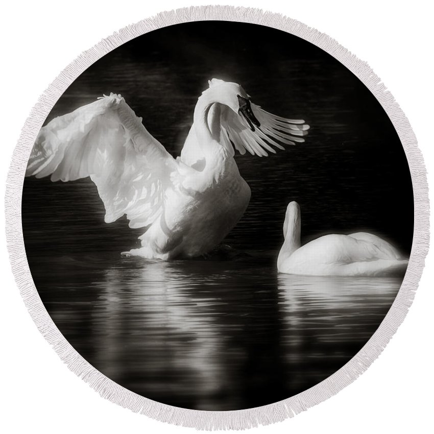 Animals Round Beach Towel featuring the photograph Swan Display by Rikk Flohr