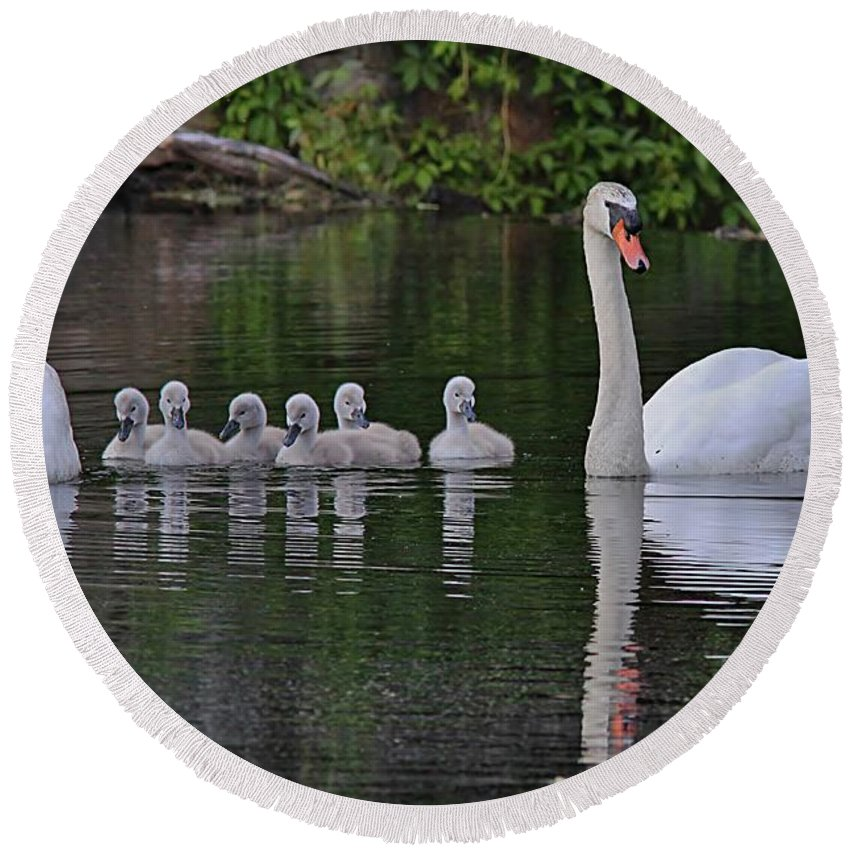 Swans Round Beach Towel featuring the photograph Swan Family Portrait by Linda Crockett