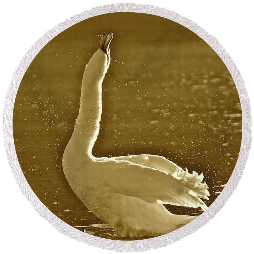 Swan Round Beach Towel featuring the photograph Swan Lake by Diana Hatcher