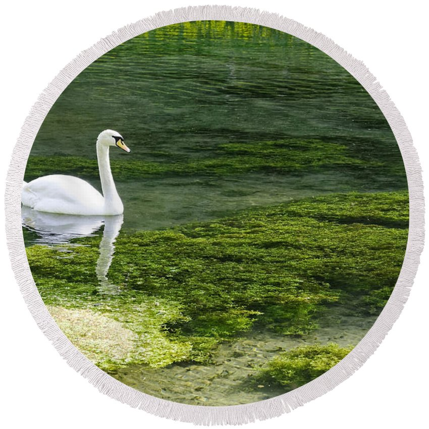 Lathkill Dale Round Beach Towel featuring the photograph Swan On The River Lathkill by Rod Johnson