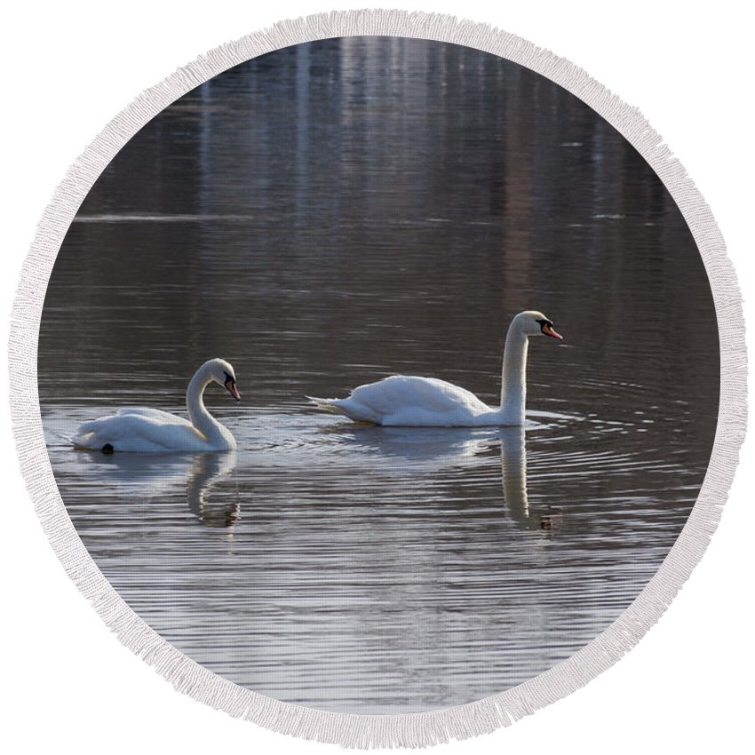 Birds Round Beach Towel featuring the photograph Swans by ChelleAnne Paradis