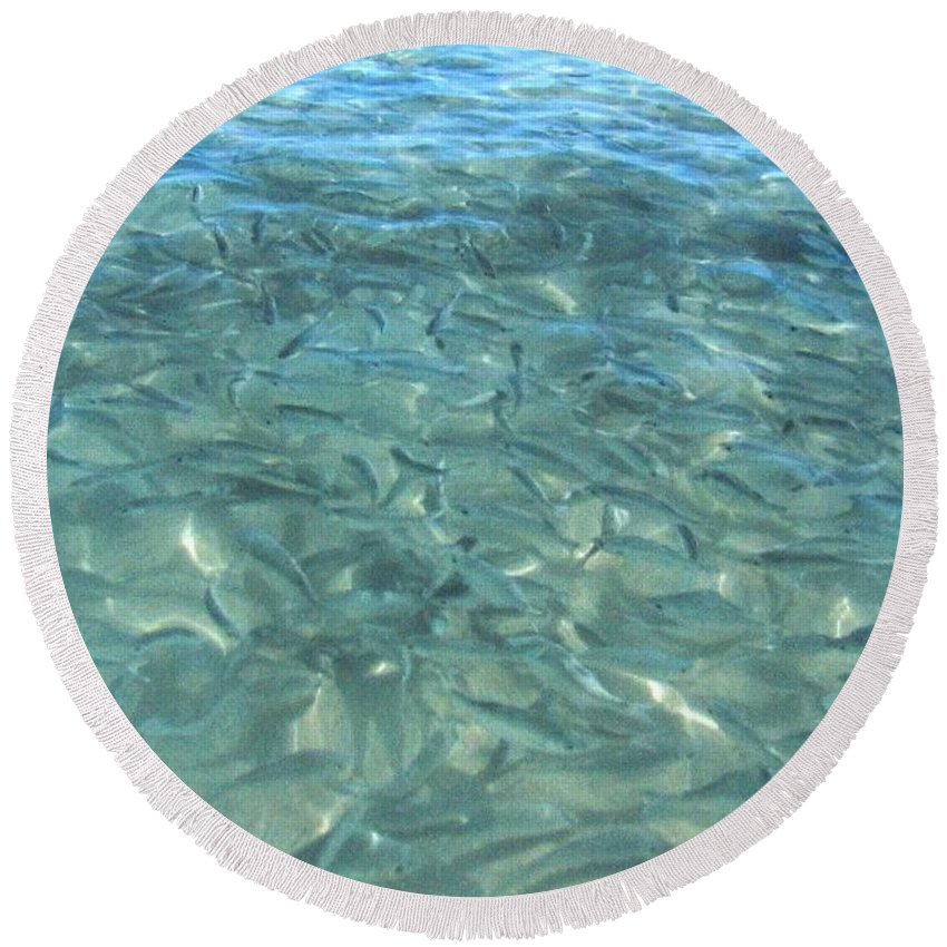 1986 Round Beach Towel featuring the photograph Swarming Fish by Will Borden