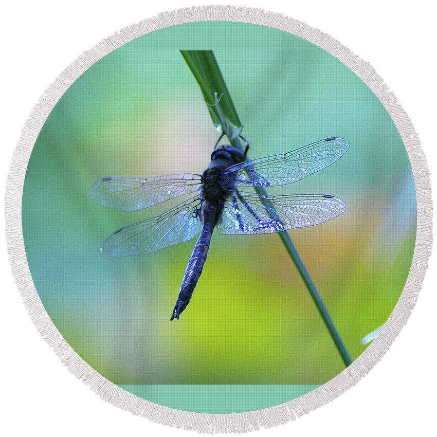 Dragonflies Round Beach Towel featuring the photograph Swaying On A Stem by Jeff Swan