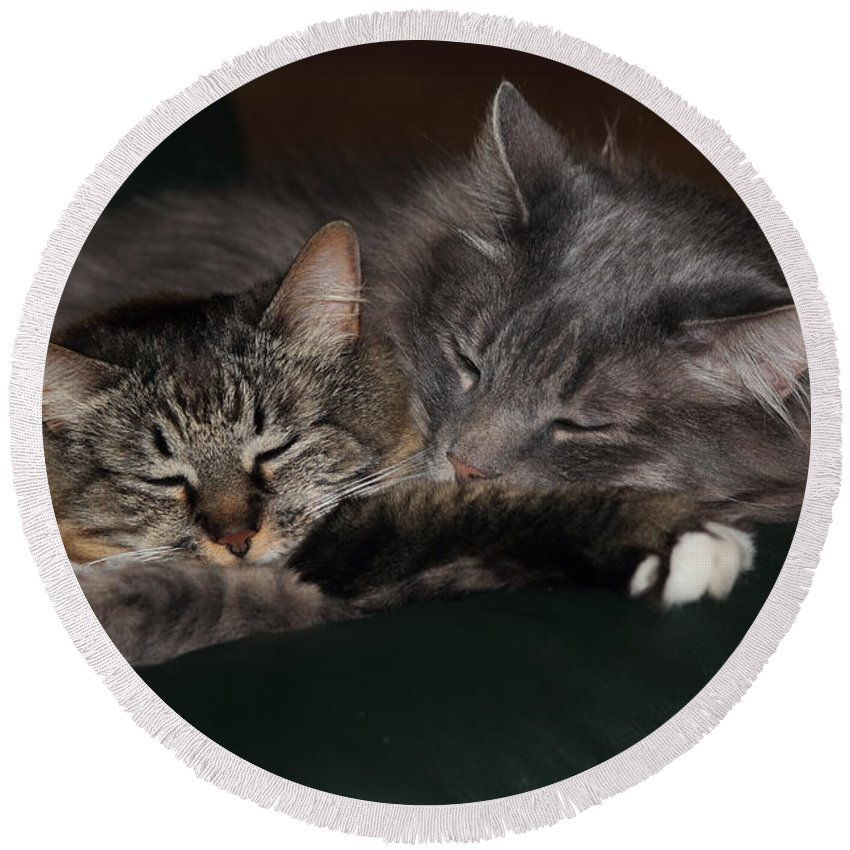 Cats Round Beach Towel featuring the photograph Sweet Dreams by Shane Bechler