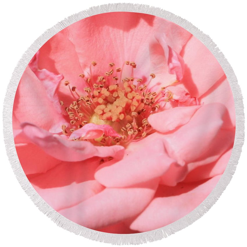Roses Round Beach Towel featuring the photograph Sweet Pink Rose by Carol Groenen