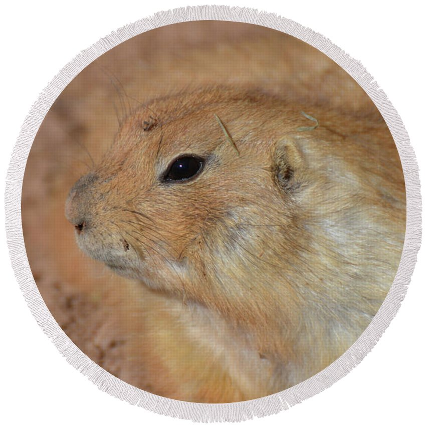 Prairie-dog Round Beach Towel featuring the photograph Sweet Profile Of A Prairie Dog Playing In Dirt by DejaVu Designs