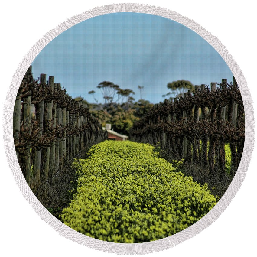 Vines Round Beach Towel featuring the photograph Sweet Vines by Douglas Barnard