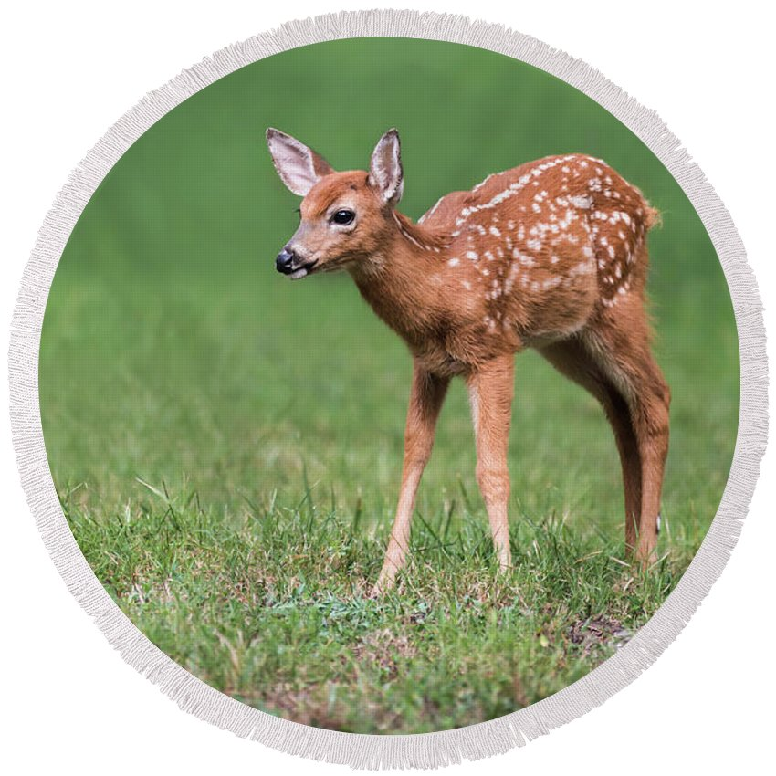 Deer Round Beach Towel featuring the photograph Sweetness by Andrea Silies
