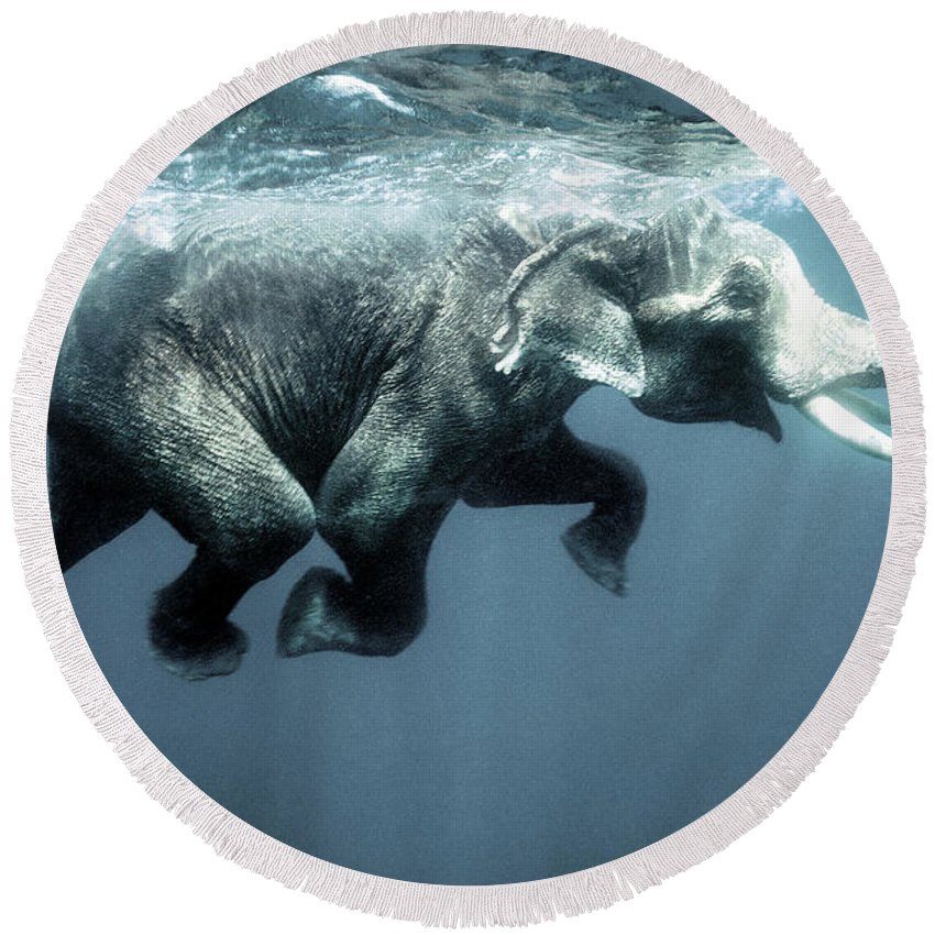 Swimming Round Beach Towel featuring the photograph Swimming Elephant by Olivier Blaise