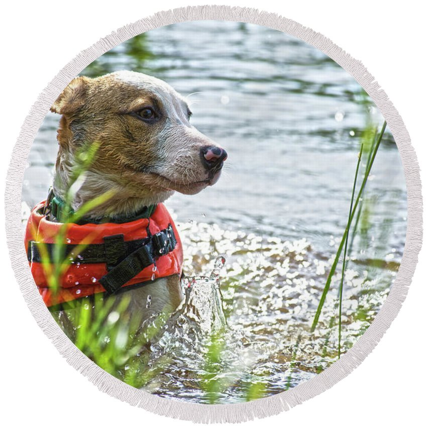 Dog Round Beach Towel featuring the photograph Swimming Family Dog by Justin Mountain
