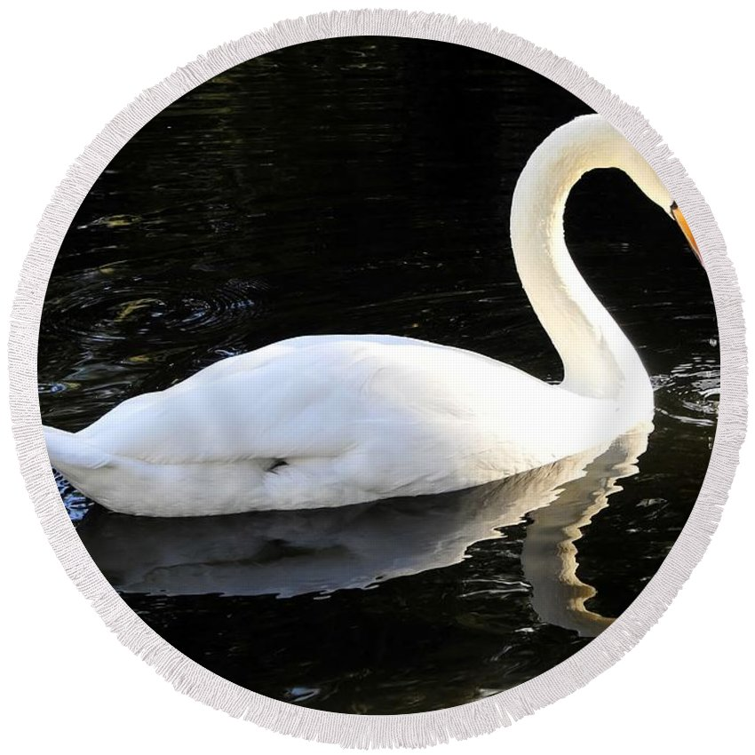 Swan Round Beach Towel featuring the photograph Swimming Swan by David Lee Thompson