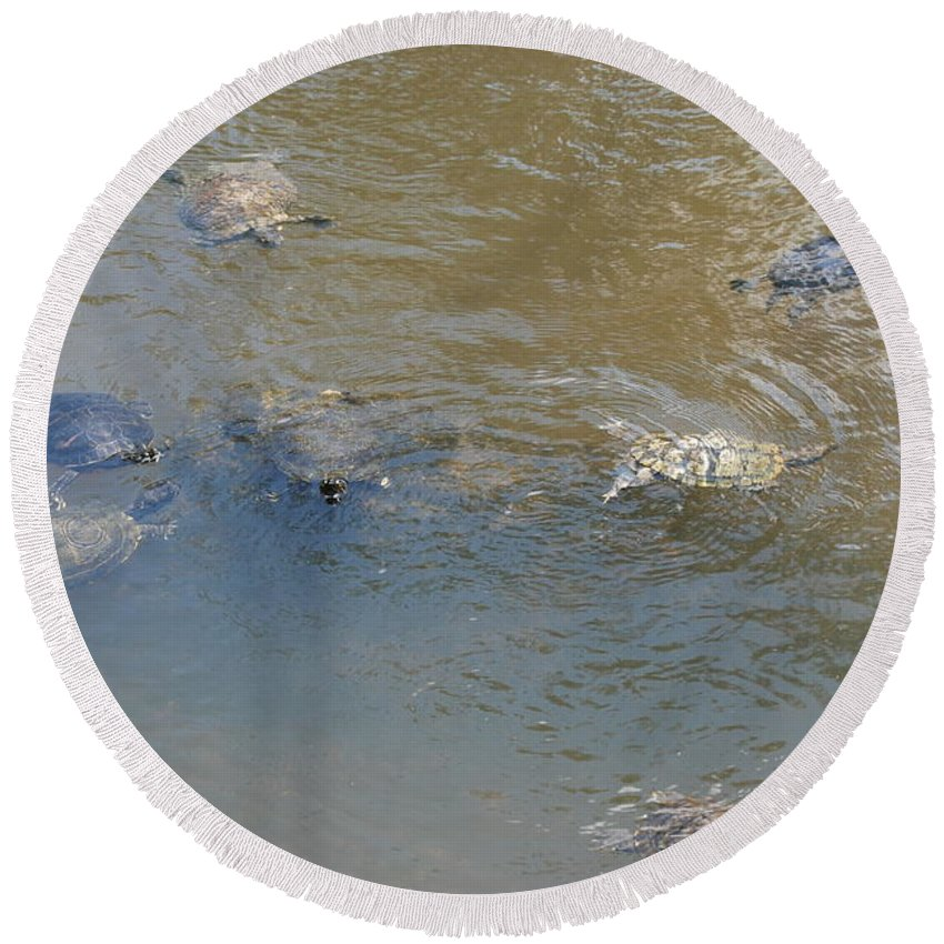 Water Round Beach Towel featuring the photograph Swimming Turtles by Rob Hans