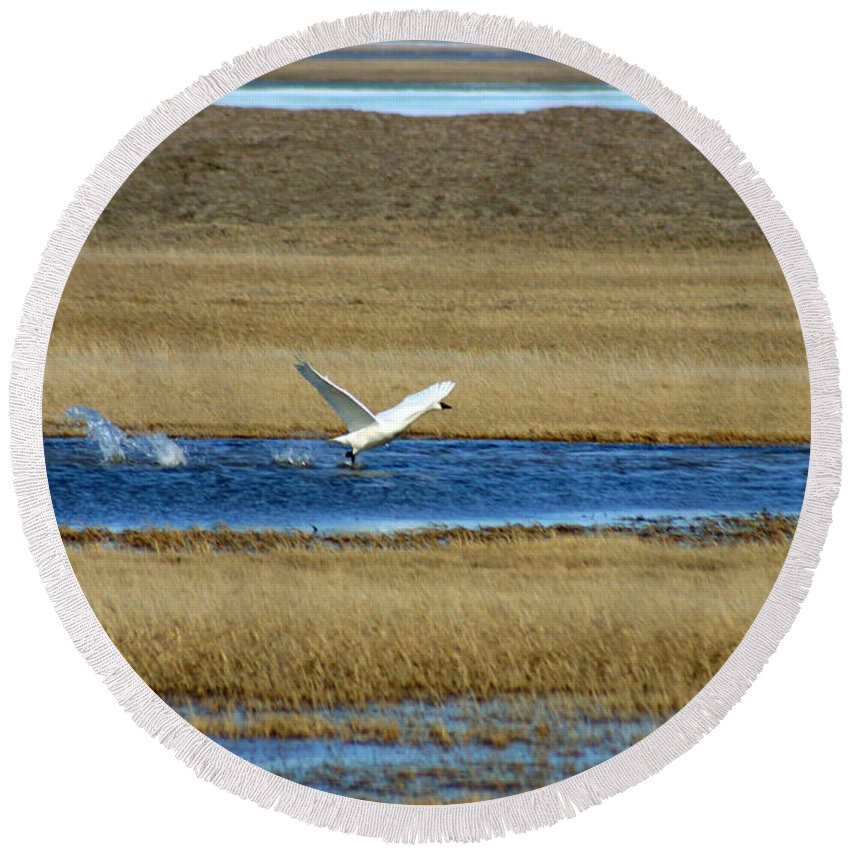 Swan Round Beach Towel featuring the photograph Take Off by Anthony Jones