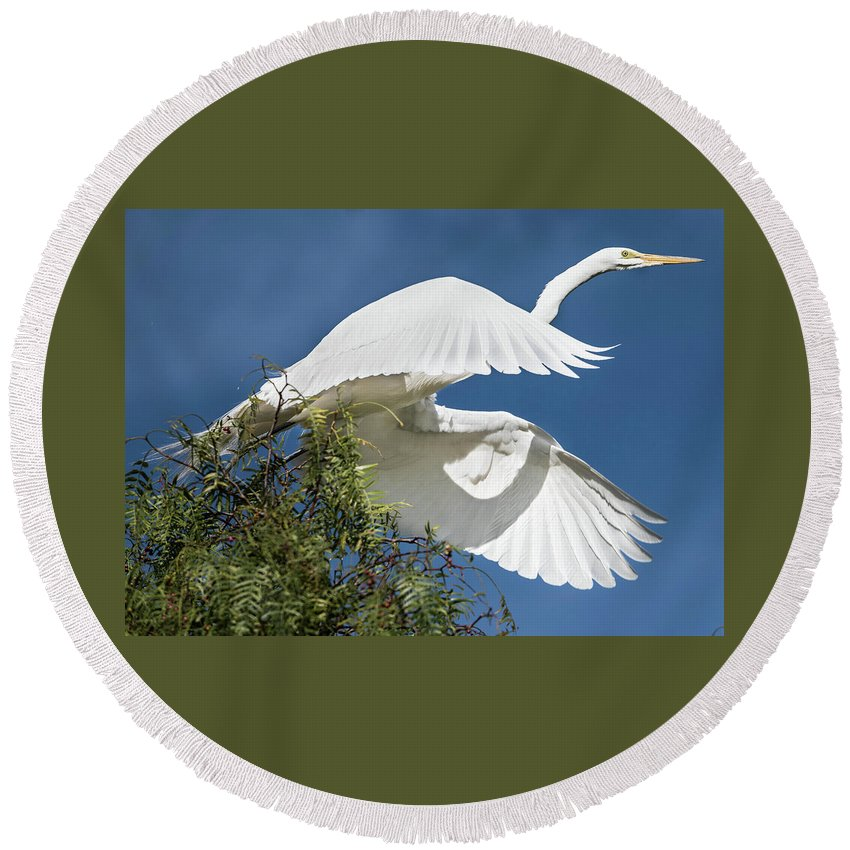 Great Egret Round Beach Towel featuring the photograph Take-off by Tran Boelsterli