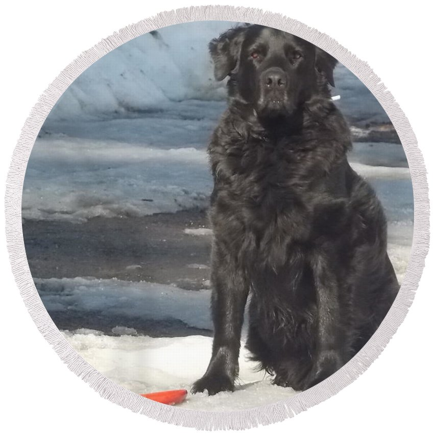 Black Lab Round Beach Towel featuring the photograph Let's Play by Kathleen Moore Lutz