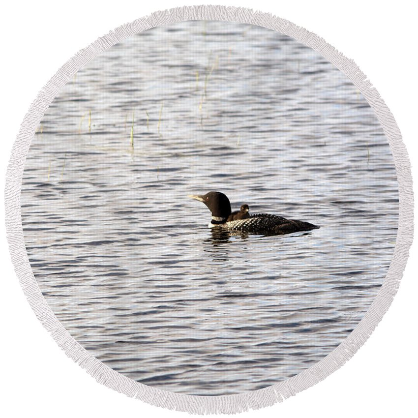 Common Loon Round Beach Towel featuring the photograph Taking A Ride On Mom by Linda Kerkau