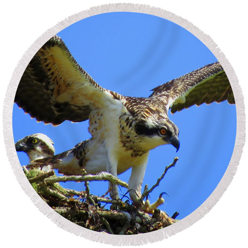 Osprey Round Beach Towel featuring the photograph Taking Flight by Dianne Cowen