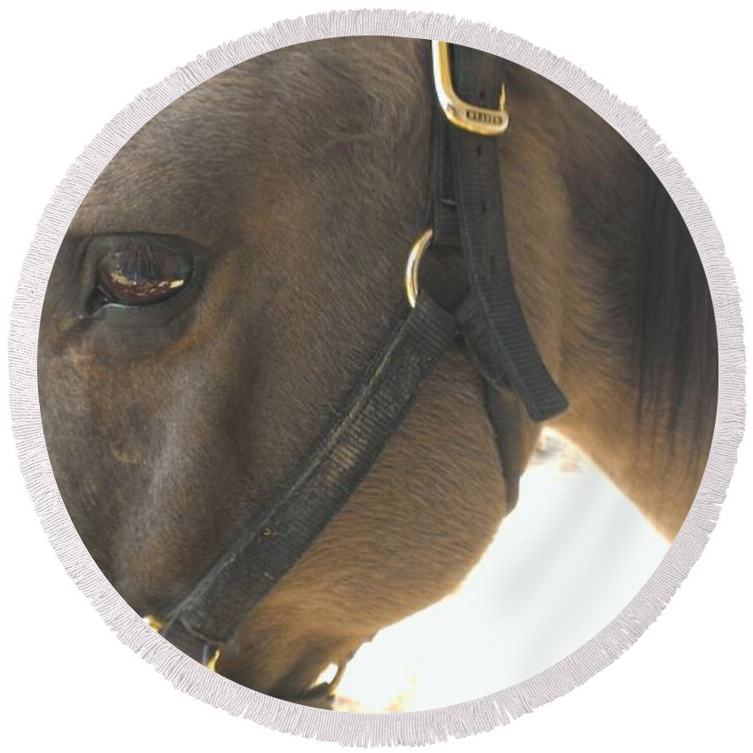 Horse Round Beach Towel featuring the photograph Talker by LKB Art and Photography