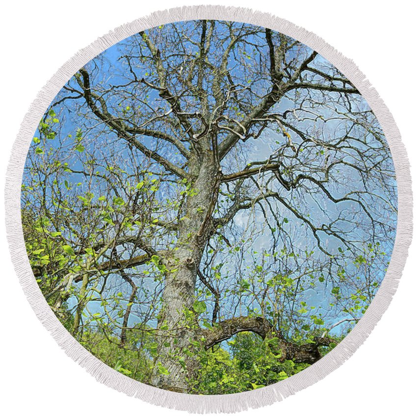 Tree Round Beach Towel featuring the photograph Tall Tree by Kevin Richardson