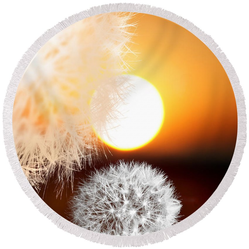 Taraxacum Round Beach Towel featuring the photograph Taraxacum Sunset by Mal Bray