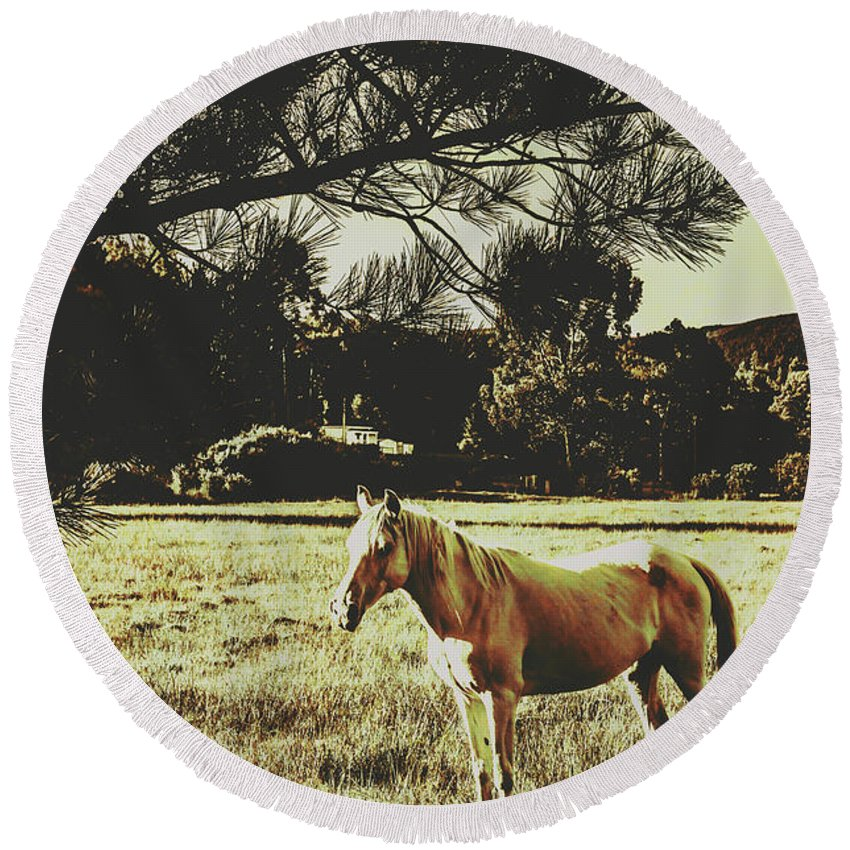 Horse Round Beach Towel featuring the photograph Tasmanian Rural Farm Horse by Jorgo Photography - Wall Art Gallery