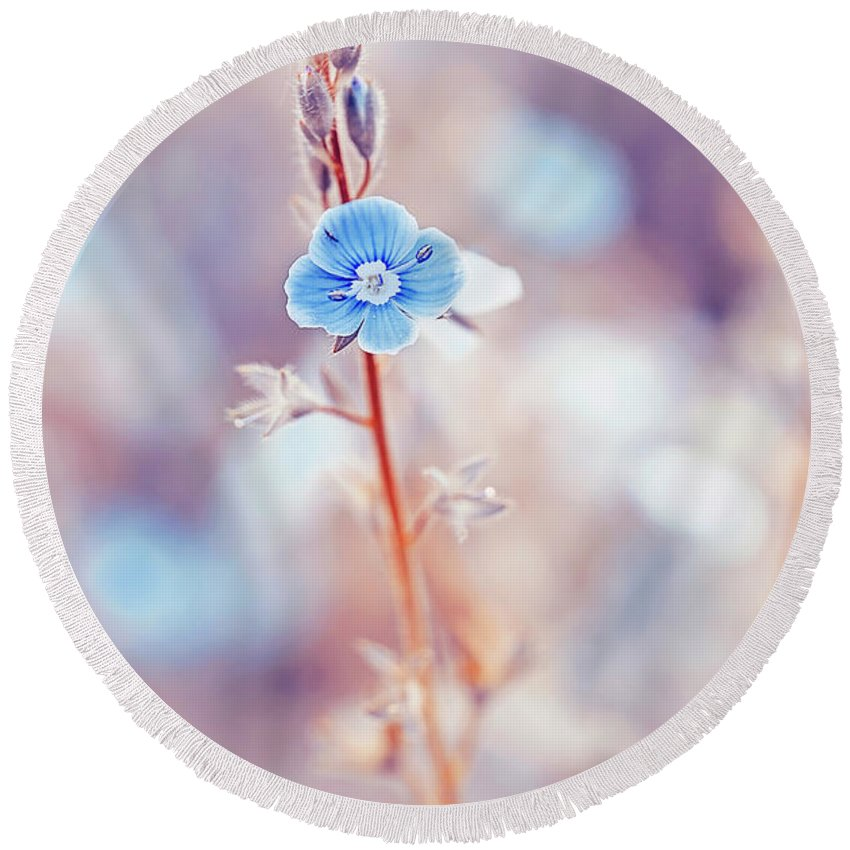 Beautiful Round Beach Towel featuring the photograph Tender Forget-me-not Flower by Oksana Ariskina