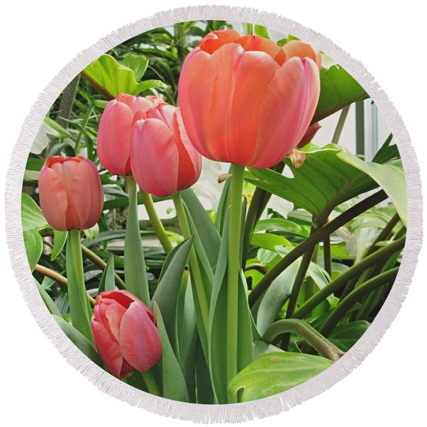 Botanical Gardens Round Beach Towel featuring the photograph Tender Tulips by Elizabeth Duggan
