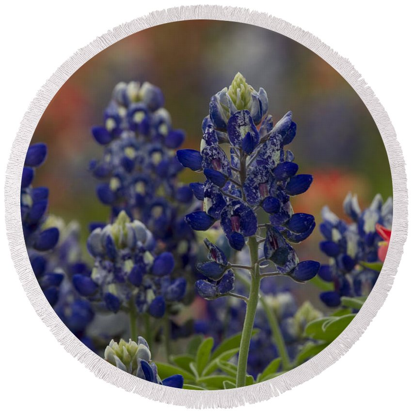 Lupine Round Beach Towel featuring the photograph Texas Bluebonnet by Debby Richards
