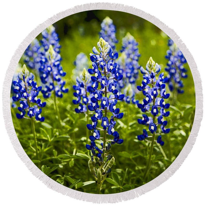 Texas Round Beach Towel featuring the photograph Texas Bluebonnets by Stephen Stookey
