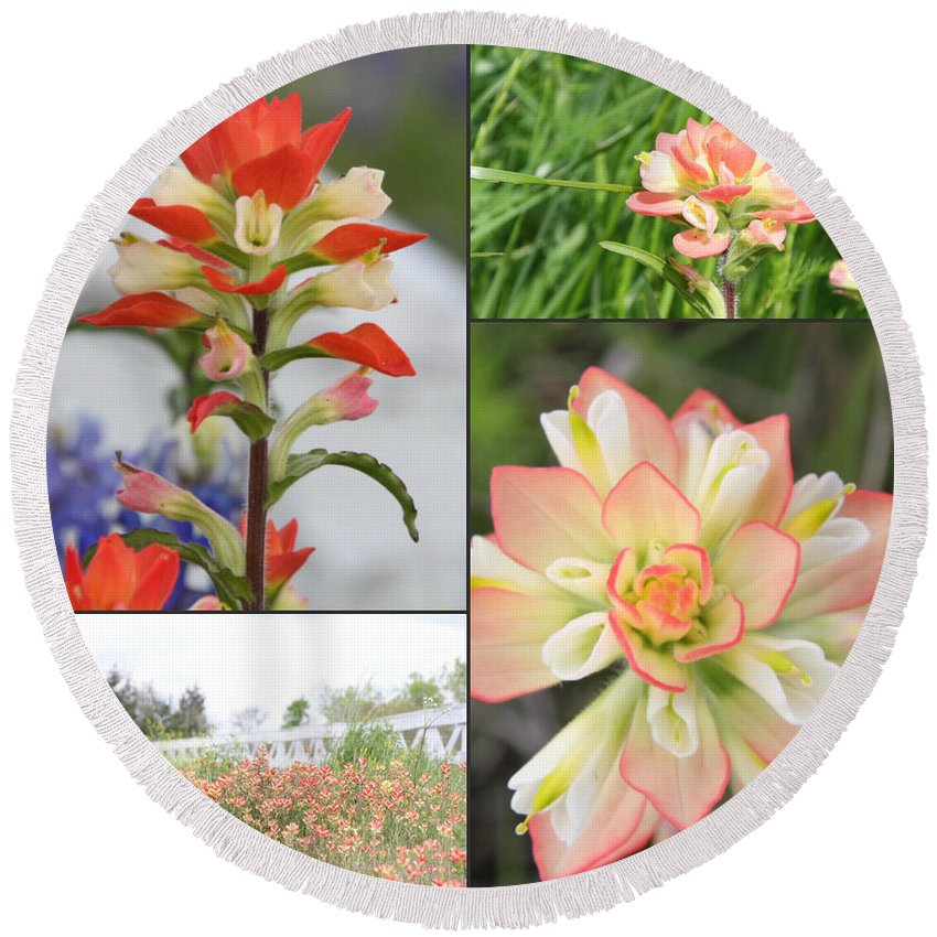 Indian Paintbrush Round Beach Towel featuring the photograph Texas Indian Paintbrush Collage by Amy Steeples