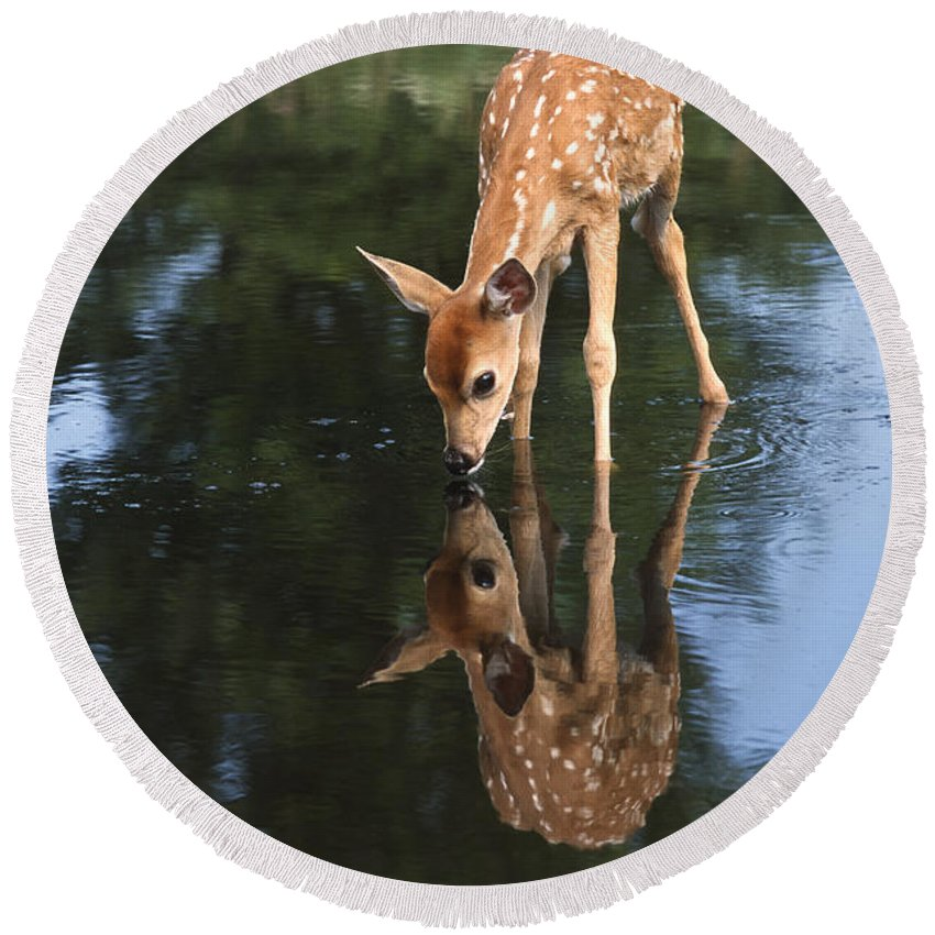 White Tailed Deer Photographs Round Beach Towels