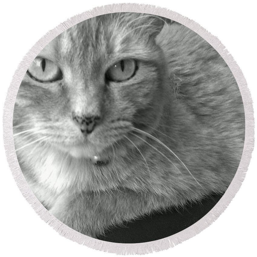 Cat Round Beach Towel featuring the photograph That Spotted Nose by LKB Art and Photography
