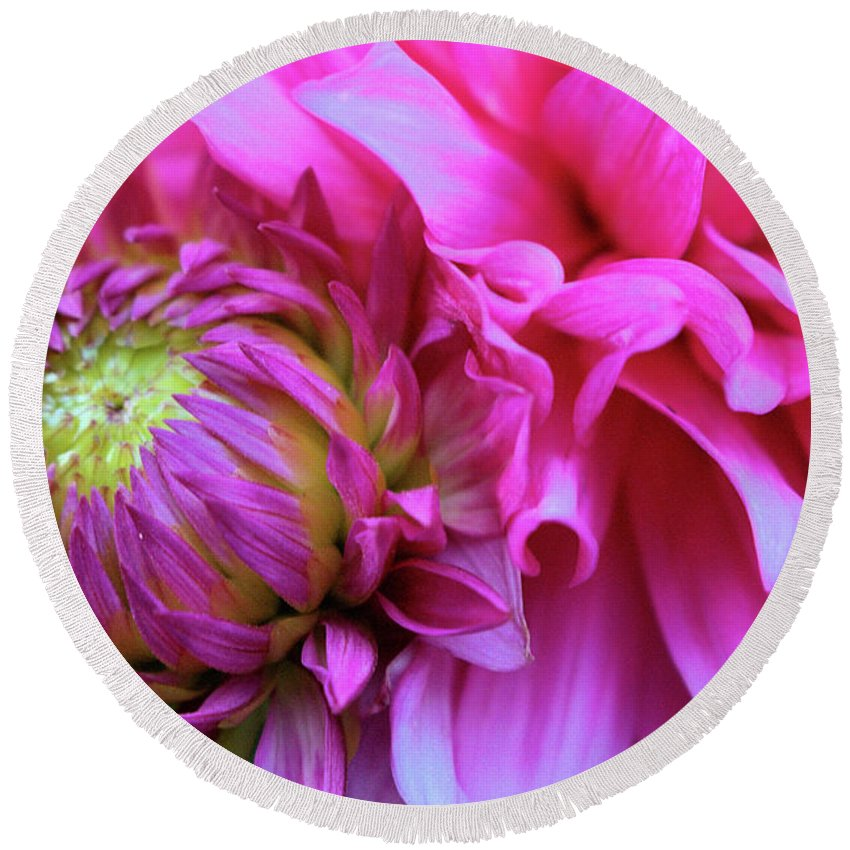 Dahlia Round Beach Towel featuring the photograph The Anticipation Of Dahlia 3 by Victor K