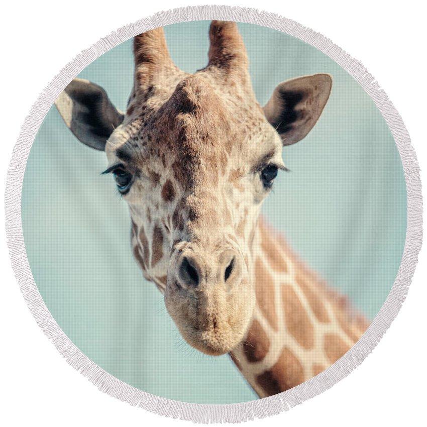 Giraffe Round Beach Towels