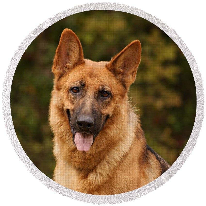 German Shepherd Dog Round Beach Towel featuring the photograph The Beautiful Kelly by Sandy Keeton