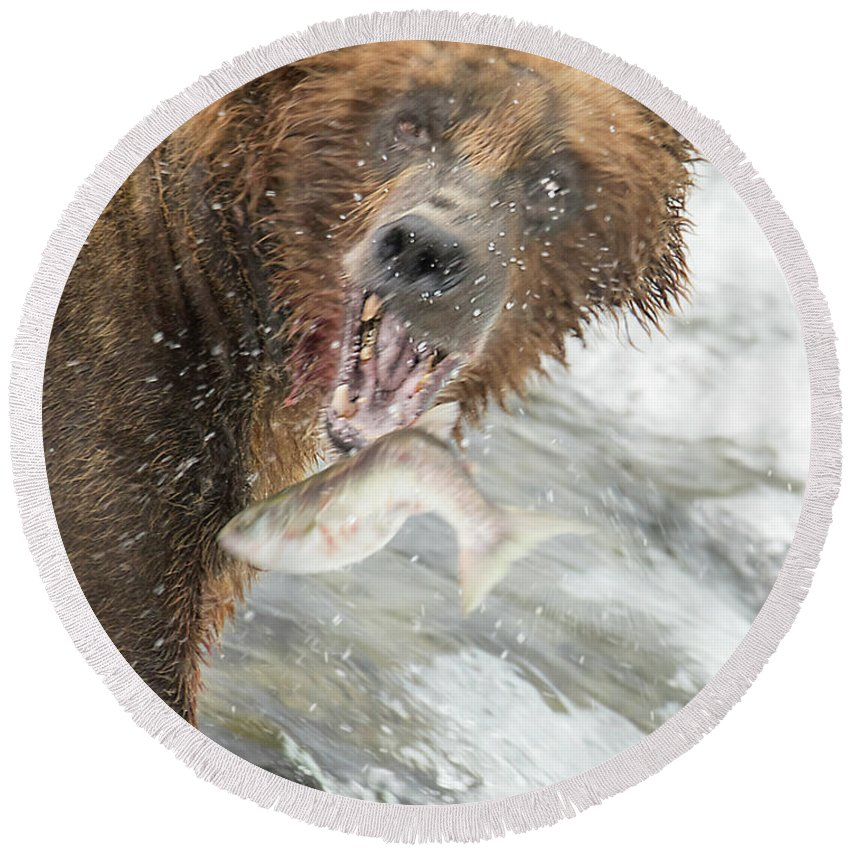 Bear Round Beach Towel featuring the photograph The Bite by Jim Chamberlain