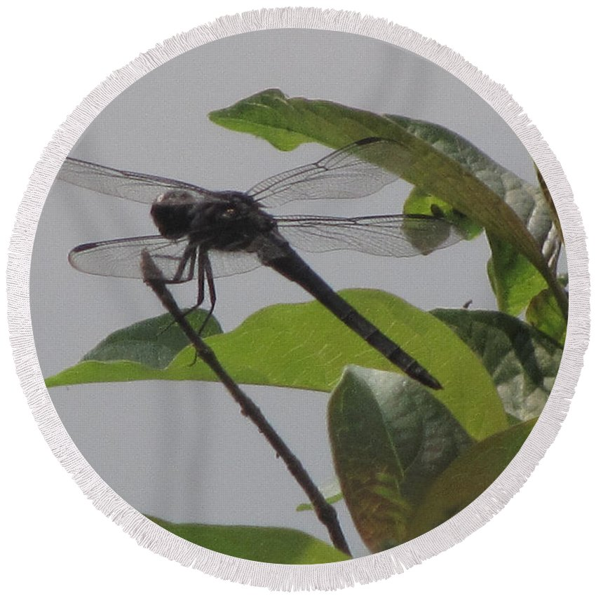 Dragonfly Round Beach Towel featuring the photograph The Black Saddlebags Dragonfly by Donna Brown