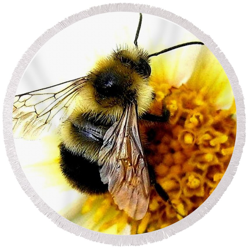 Honeybee Round Beach Towel featuring the photograph The Buzz by Will Borden
