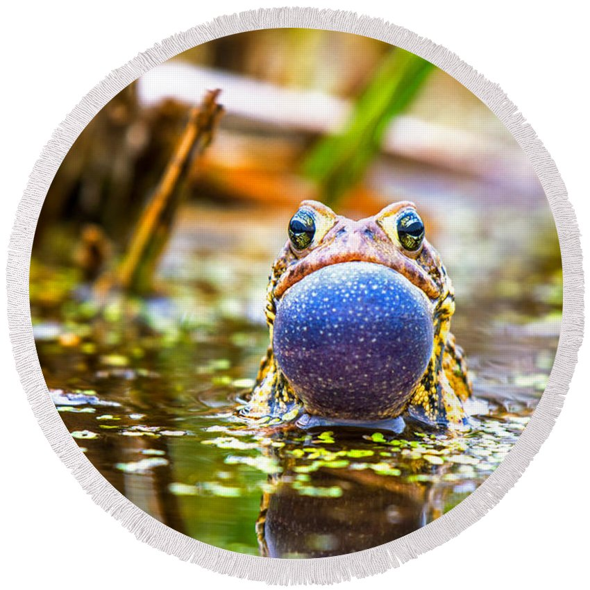 Frog Round Beach Towel featuring the photograph The Calling Frog by Henry Kim