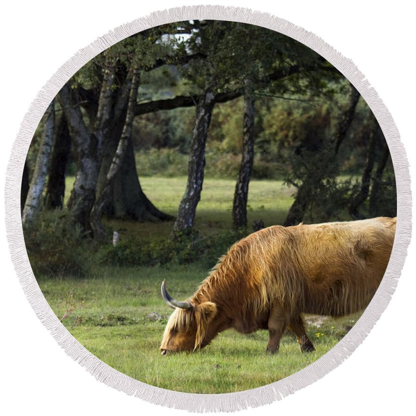 Heilan Coo Round Beach Towel featuring the photograph The Creature Of New Forest by Angel Tarantella