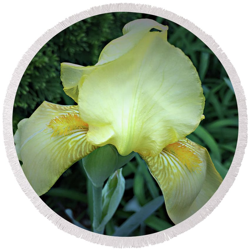 Iris Round Beach Towel featuring the photograph The Dainty Side Of An Iris by Sherry Hallemeier