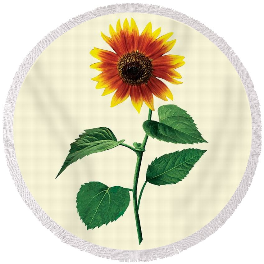 Sunflower Round Beach Towel featuring the photograph The Dancing Sunflower by Susan Savad