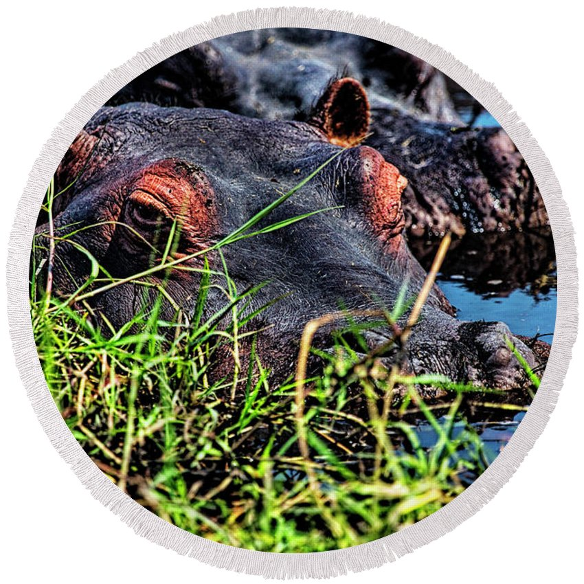 Hippopotamus Round Beach Towel featuring the photograph The Eating Machine Called A Hippo by Kay Brewer