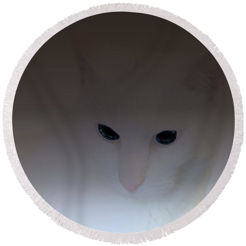Cat Round Beach Towel featuring the digital art The Eyes Have It by Diane Parnell