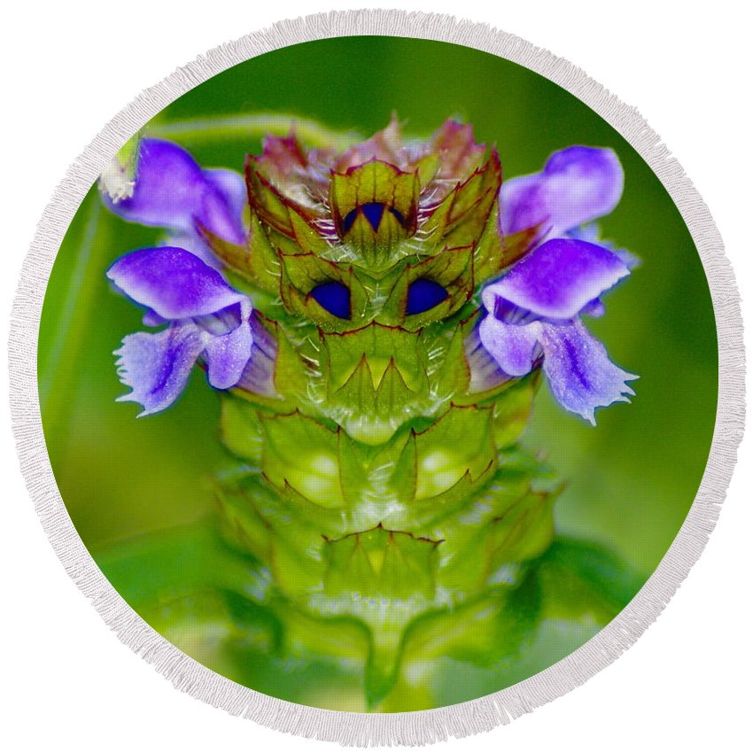 Nature Round Beach Towel featuring the photograph The Flower King by Ben Upham III
