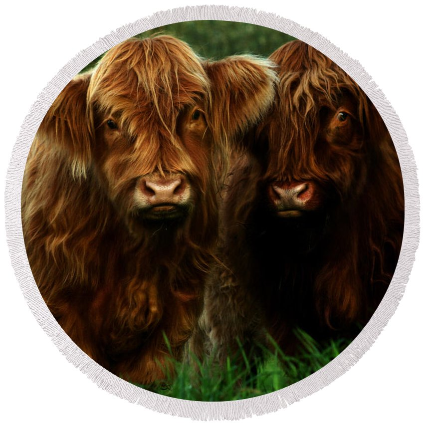 Heilan Coo Round Beach Towel featuring the photograph The Fluffy Cows by Angel Ciesniarska