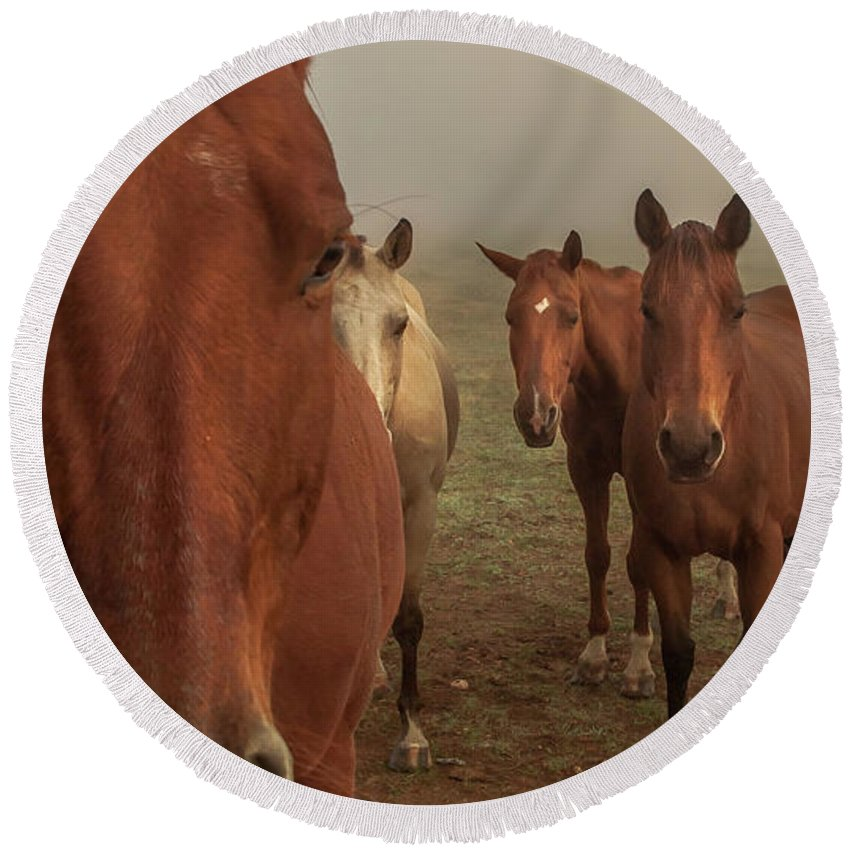 Animal Round Beach Towel featuring the photograph The Gauntlet - Horses by Robert Frederick
