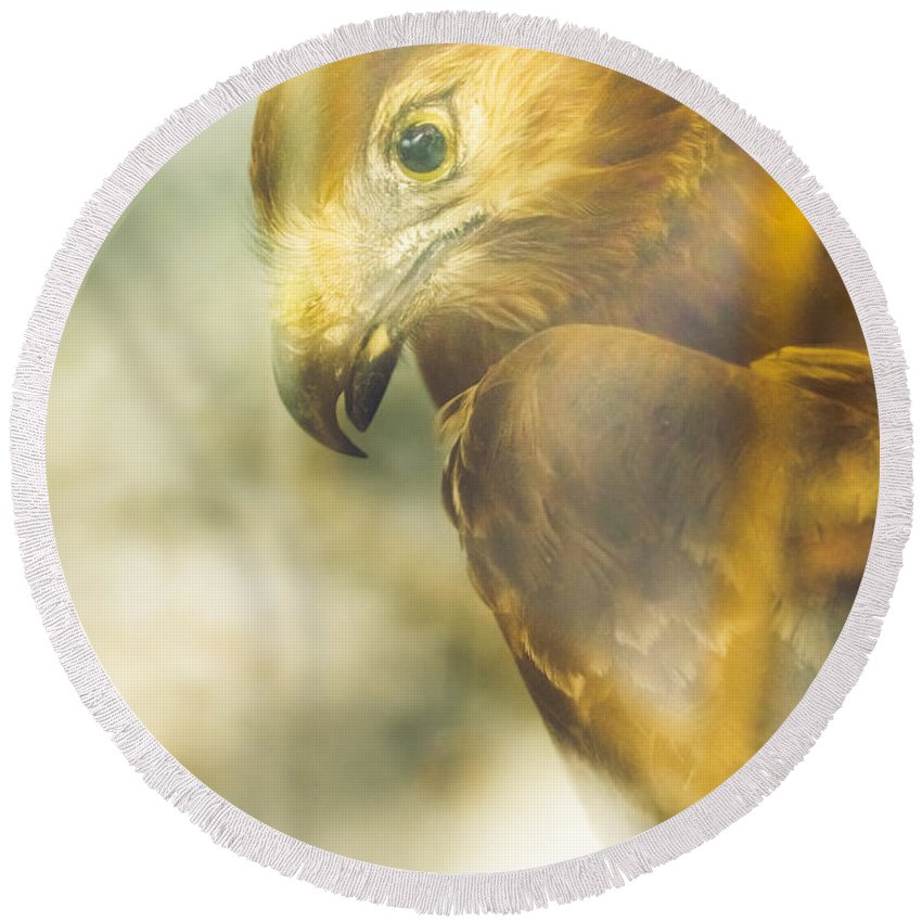 Eagle Round Beach Towel featuring the photograph The Glass Case Eagle by Jorgo Photography - Wall Art Gallery