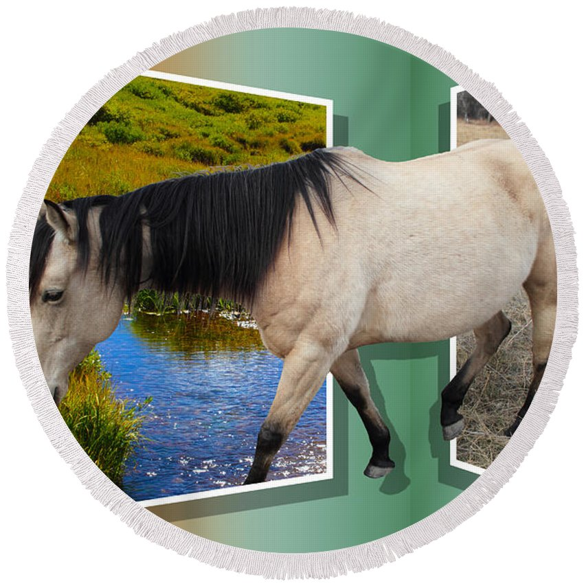 Horse Round Beach Towel featuring the photograph The Grass Is Always Greener On The Other Side by Shane Bechler
